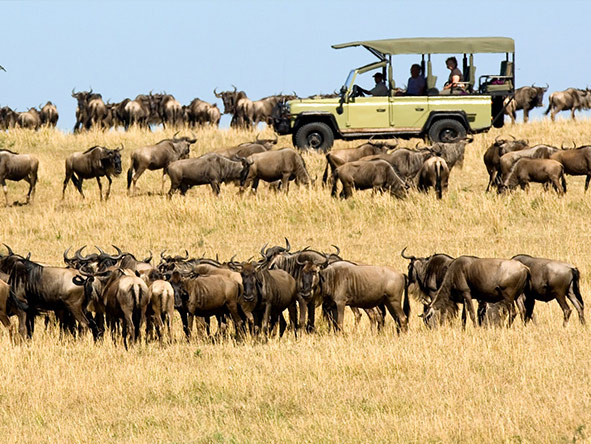 Game viewing in the Serengeti