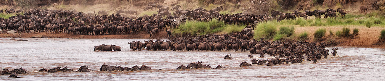 Wildebeest Migration - July - December