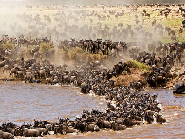 East Africa Safari - great migration