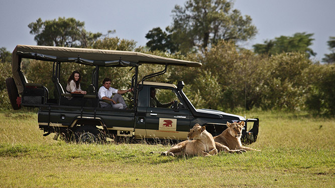 Is it safe to travel to Kenya? Game Drive