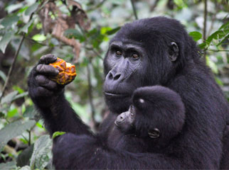 Where to Go in Africa in June - feeding mother