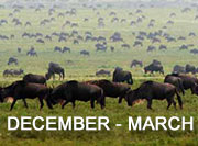 December-March Migration