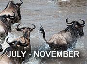 July-November Migration