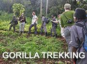 Experience Gorilla Trekking
