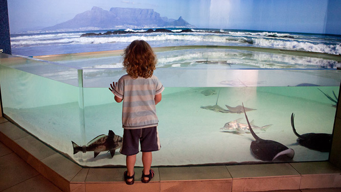 Rainy Days in Cape Town - Aquarium