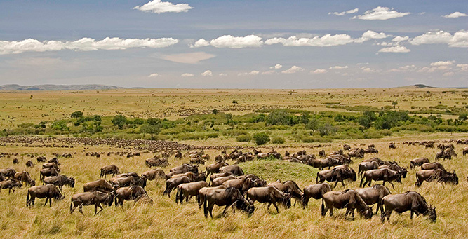 Beginner's Safari Guide to Tanzania - the Great Migration