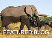 When to Go to Botswana - Featured Blog