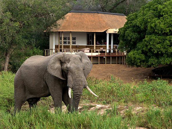 Exeter river lodge, Elephant