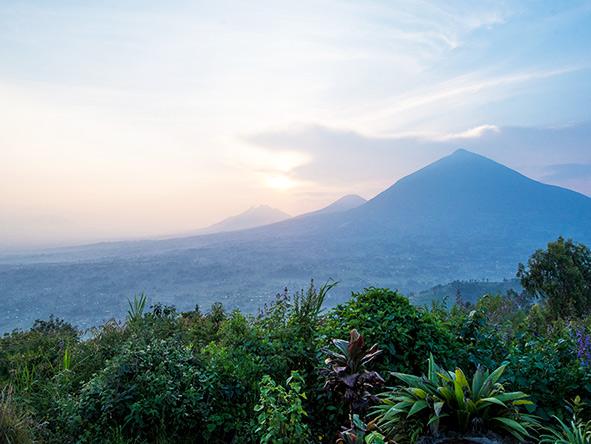 Rwanda wilderness