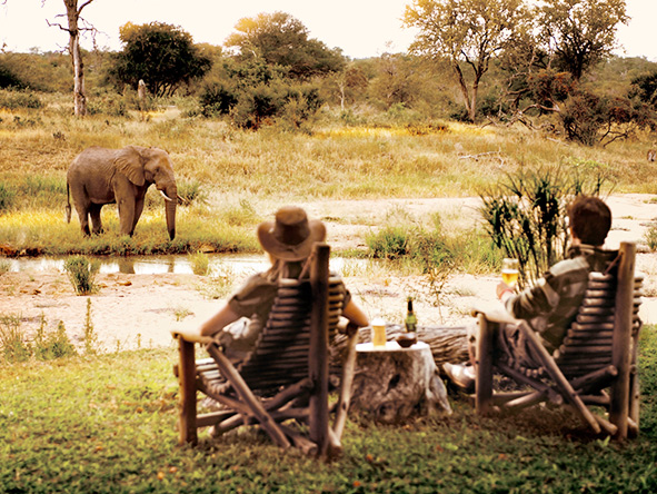 Motswari Lodge, elephant sighting