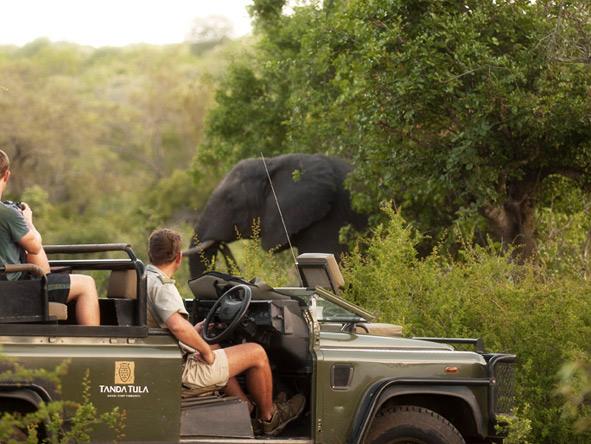 Tanda Tula safari - Elephant