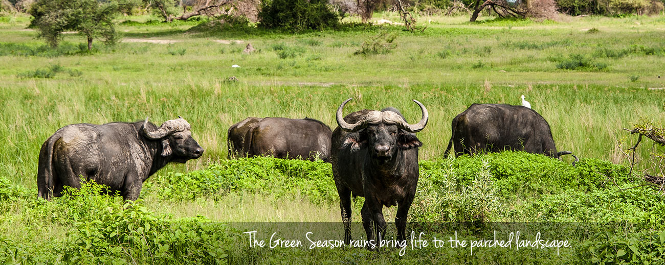 A Green Season Safari Guide