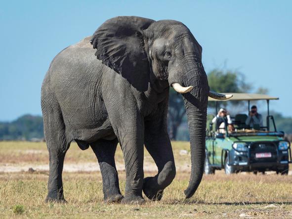 Hwange National Park - Elephant