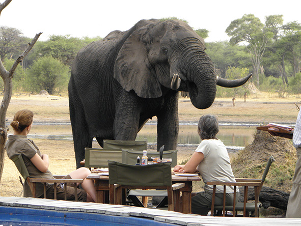 The Hide - Elephants