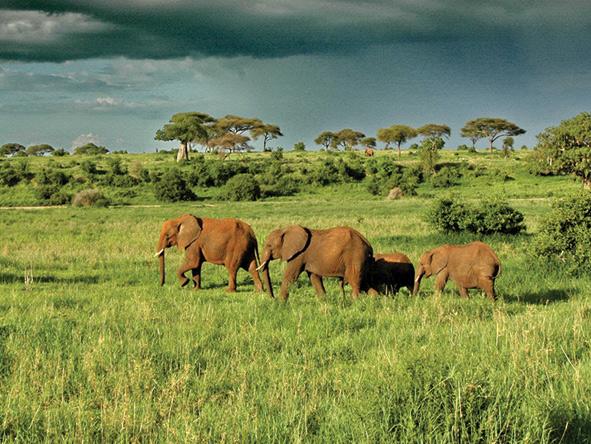 Tarangire National Park - elephant herds