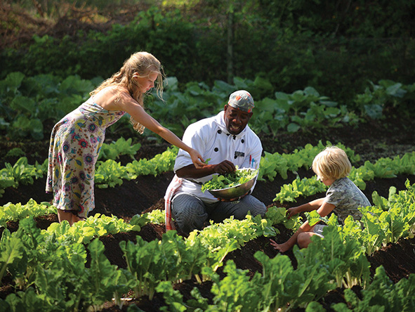 Children helping the chef in the garden