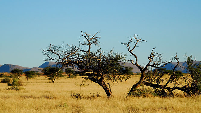 Our Kalahari Safari - iconic landscape
