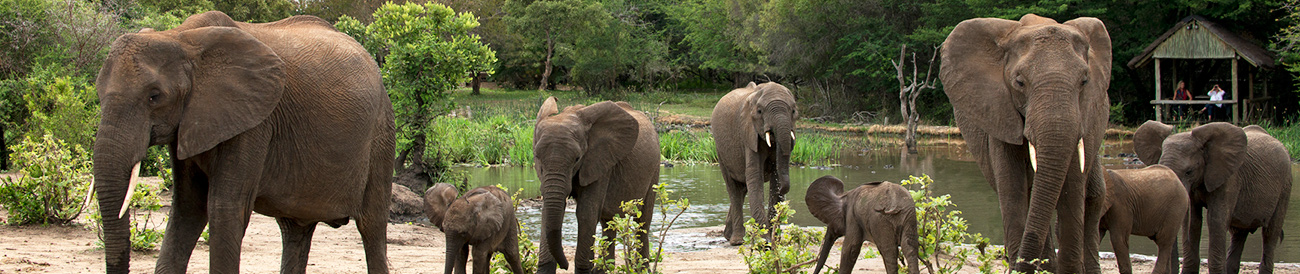 Tanda Tula Safari Camp - Elephants