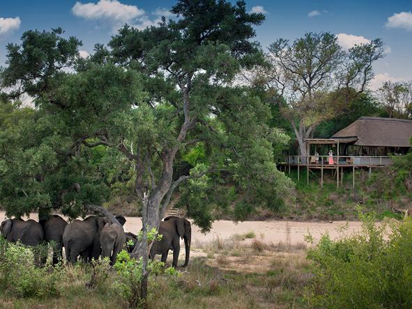 Tanda Tula Safari Camp - Kruger Park