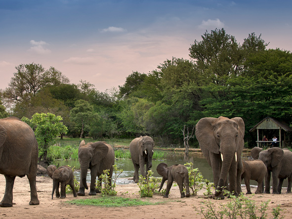 Elephant sightings at Tanda Tula