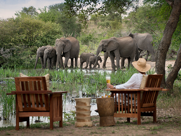 Elephants at the river, Tanda Tula safari camp