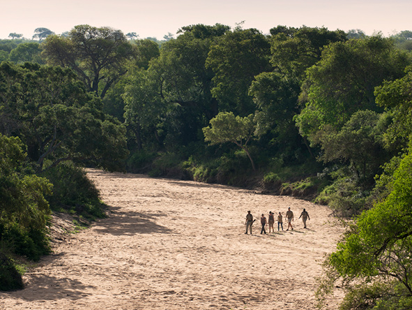 Walking safaris at Tanda Tula Safari Camp