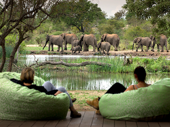 Elephants at Tanda Tula safari Camp