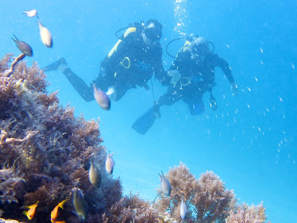Diving, Zanzibar