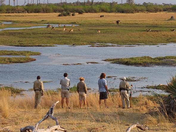 Walking Safari, Sandibe Okavango Safari Lodge