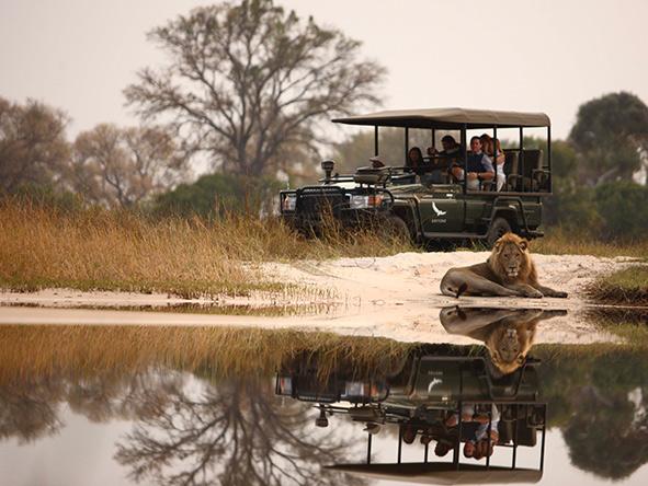 Lion, Sandibe Okavango Safari Lodge