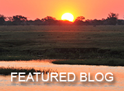 Chobe Safari - featured blog
