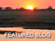 Chobe Safari - featured blog