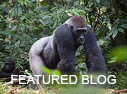 Congo Safari - featured blog
