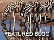 Namibia Safari - featured blog