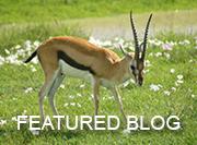 Ngorongoro Crater - feature blog