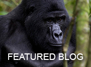 Uganda - featured blog