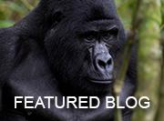 Uganda - featured blog