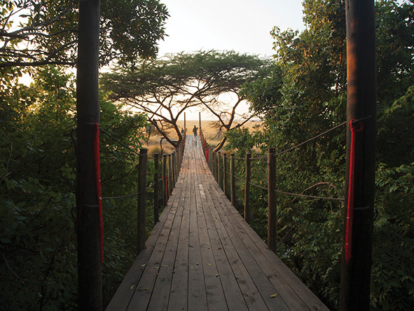 river bridge, mara plains camp
