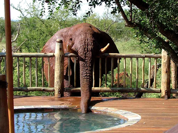 Etali safari lodge, elephant
