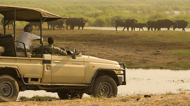Top Tips on Booking Your African Safari - game drive