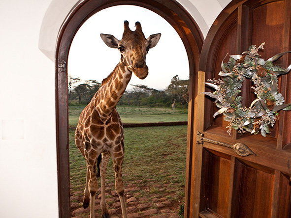 Giraffe at the Manor entrance