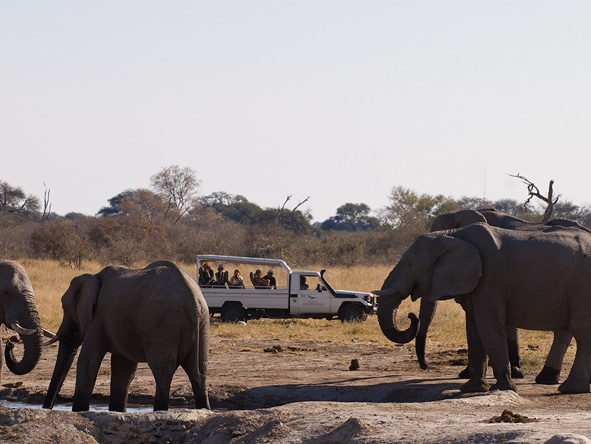 Elephants and safari vehicle, Okavango Delta