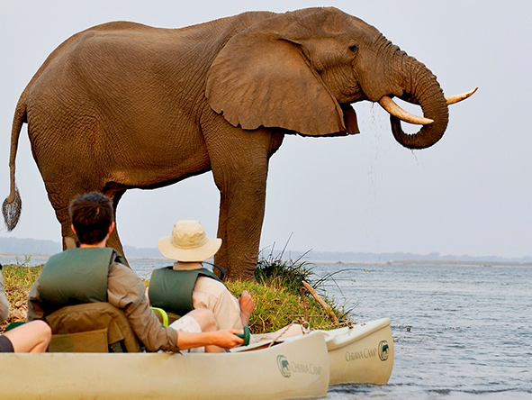 Elephants, Lower Zambezi