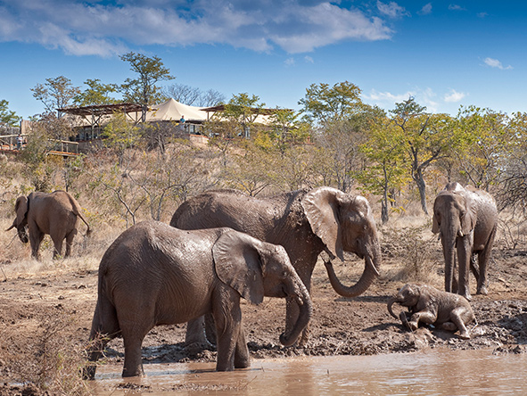 Elephant herd at the waterhole