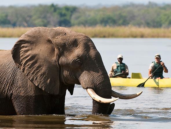 Elephant in the river, Canoe Safari