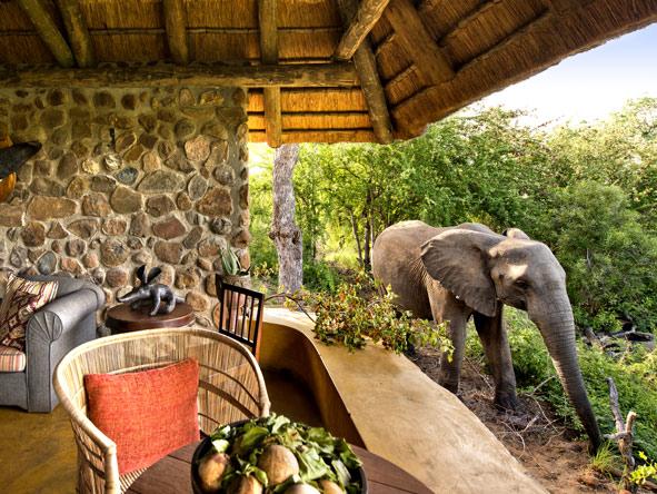 Motswari Game Lodge - Elephant