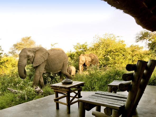 Elephants, Motswari Game Lodge