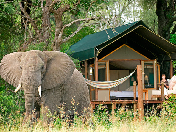 Stanley Safari Lodge, Elephants