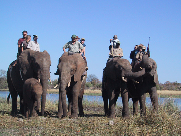 African Elephant Rides