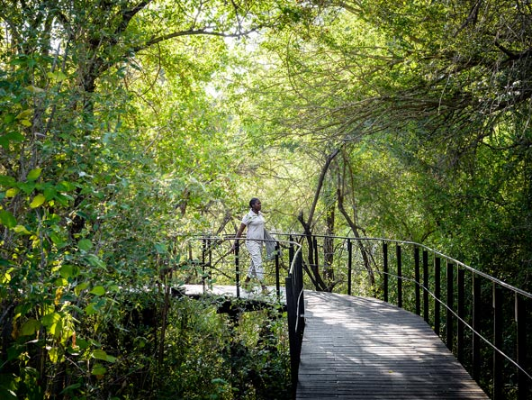 Singita Staff on walkway bridge